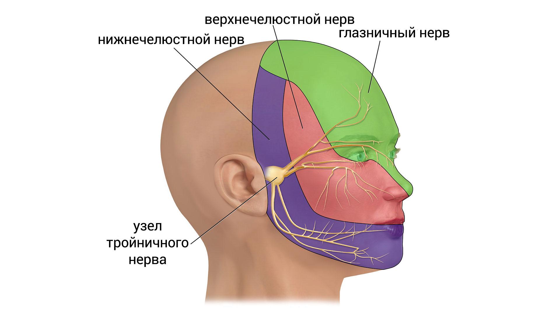 Дерматомы веток тройничного нерва